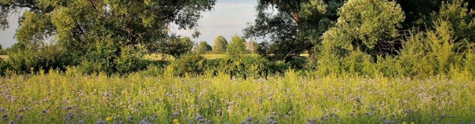 Bienenweide e.V.
