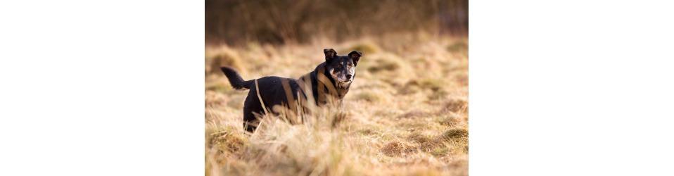 Tierhilfe Craiova - Hilfe für rumänische Tiere e.V.