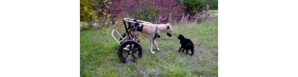 Auf eigenen Pfoten - Schutz der Würde von Tieren in Not