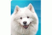 ACM - Tierfreunde für Tiere in Not e.V.