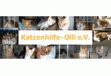 Katzenhilfe-Olli e.V.