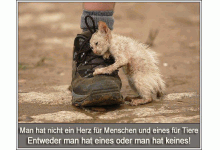 Tierschutz Bad Oldesloe e.V.