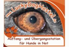 Auffang- und Übergangsstation für Hunde in Not