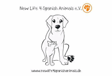 New Life 4 Spanish Animals e.V.