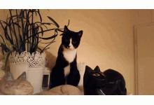 Katzen in Not e.V.