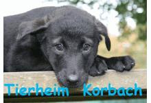 Tierheim Korbach