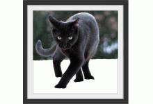 Bochumer Katzenhilfe