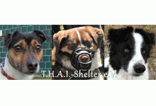 T.H.A.I.-Shelter e.V.