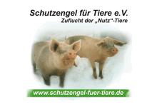 Schutzengel für Tiere e.V.