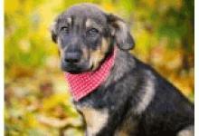 Hundepfoten SaarPfalz e.V.