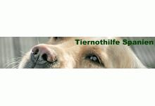 Tiernothilfe Spanien